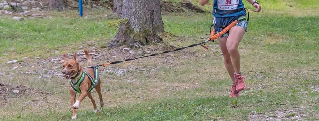 sporty dogs Piacenza
