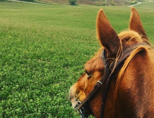 Agriranch – LA BËTLA
